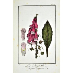 J.C. Philibert : EXERCICES DE BOTANIQUE & DICTIONNAIRE ABREGE DE BOTANIQUE. 1801